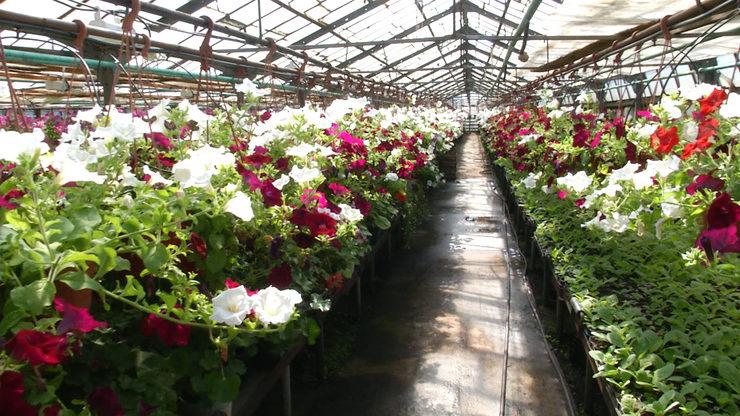 В этом году в Казани планируется высадить до 2 млн саженцев цветов